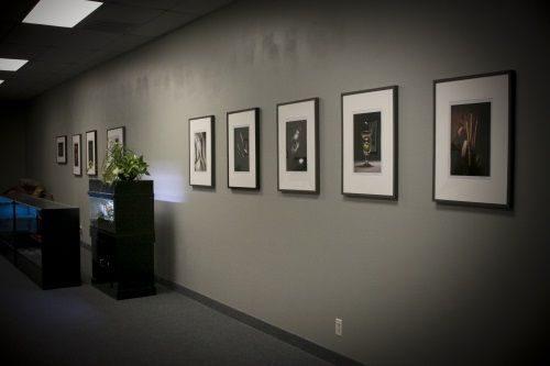 Blue Frog Vapor Office Art Work Display